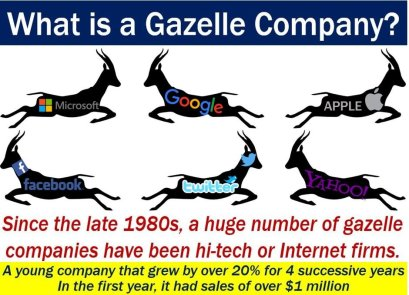Gazelle company - definition and examples