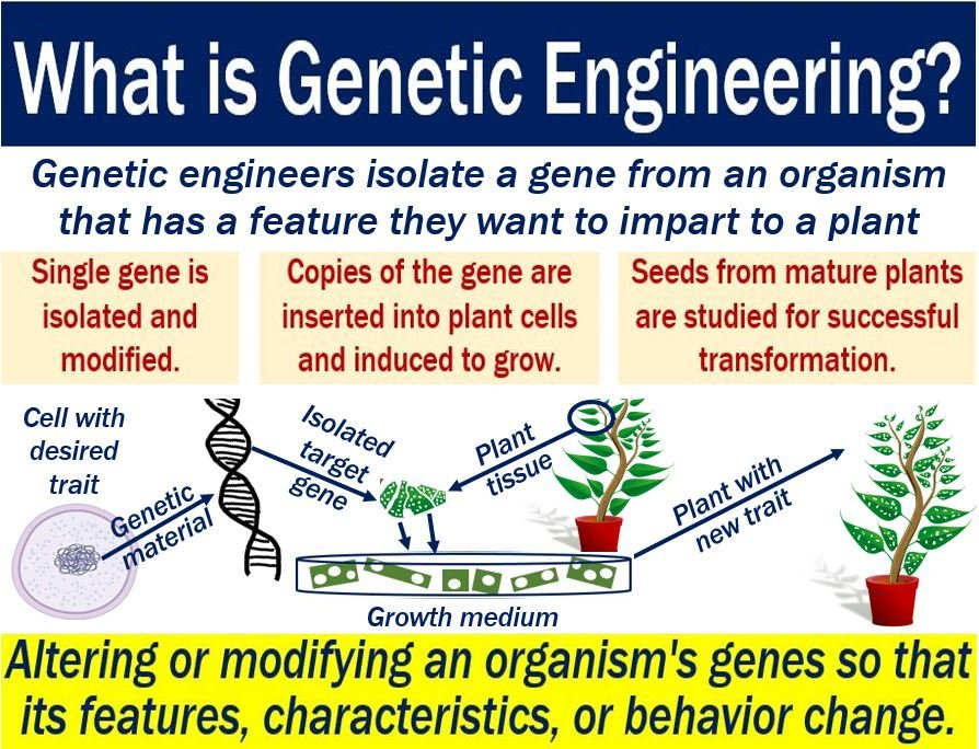 what is genetic engineering used for