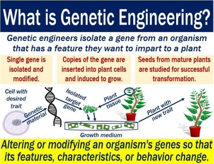 Genetic engineering - explanation of meaning and illustration