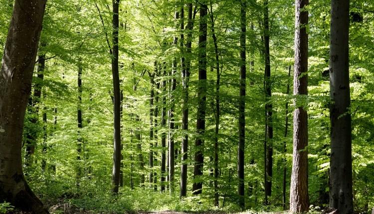 deciduous-forest-pixabay-3342013