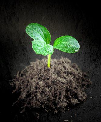 hydrogen fuel seedling pixabay 1552088
