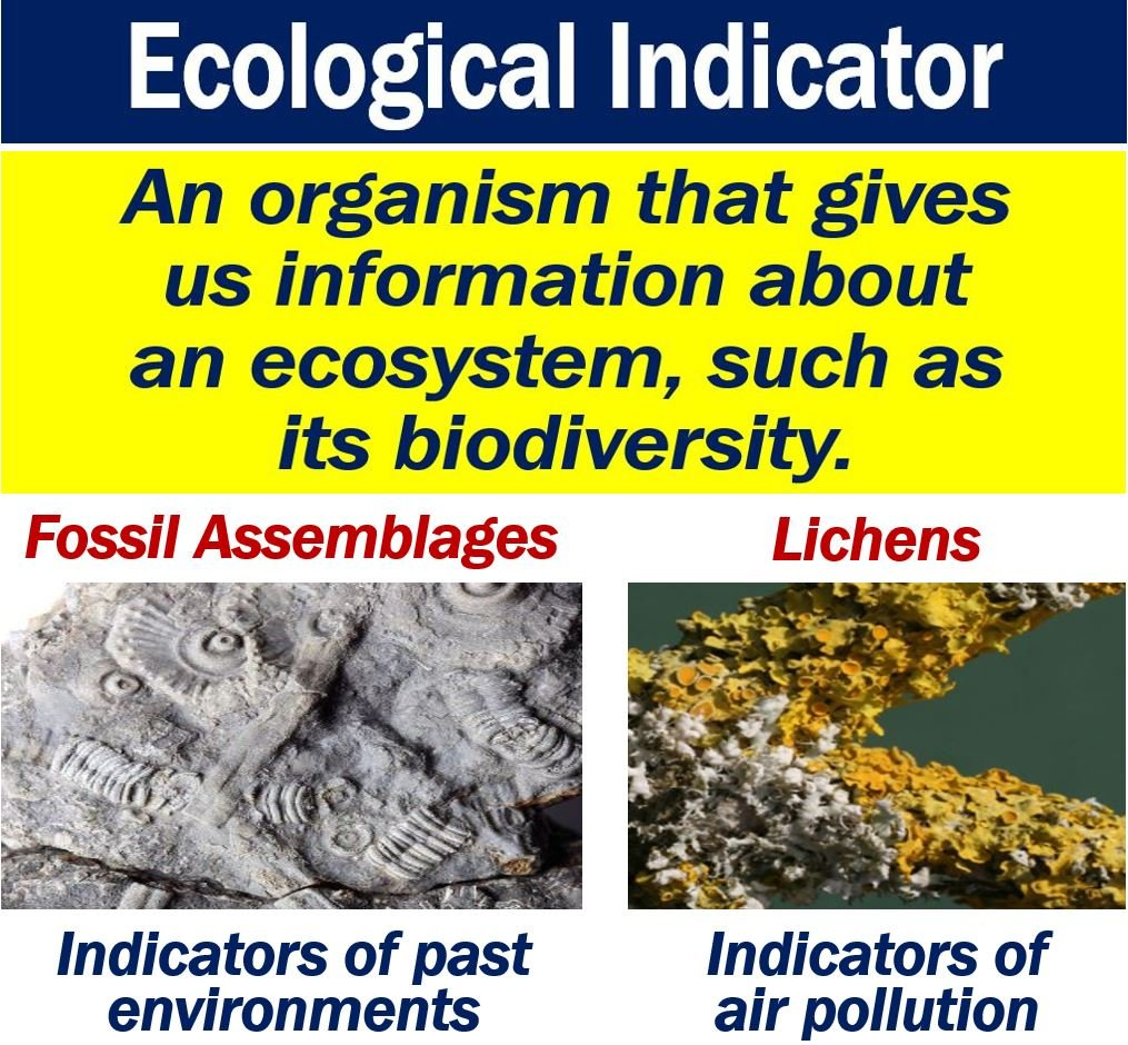 what is an ecological indicator? definition and examples - market