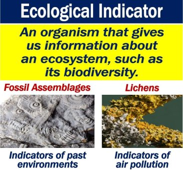 What Is An Ecological Indicator Definition And Examples Market