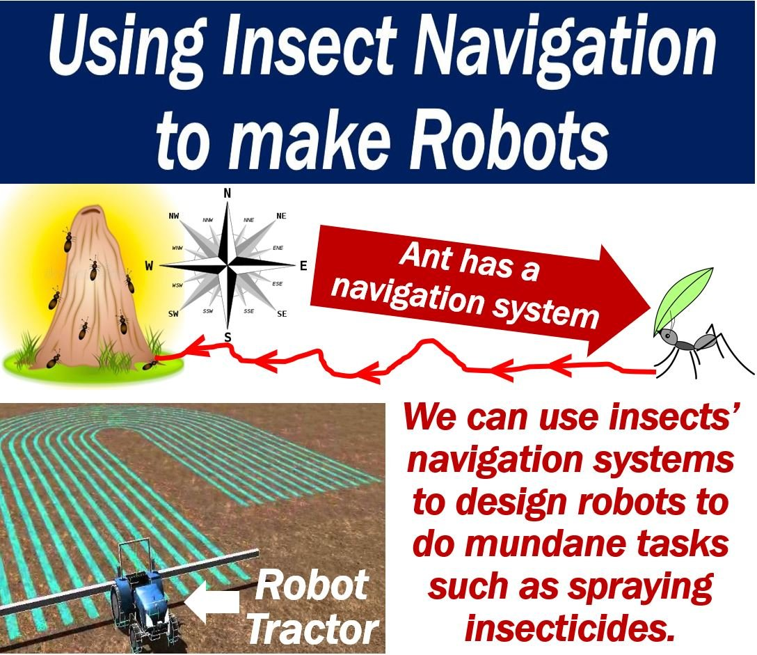 Using insect navigation to make robots