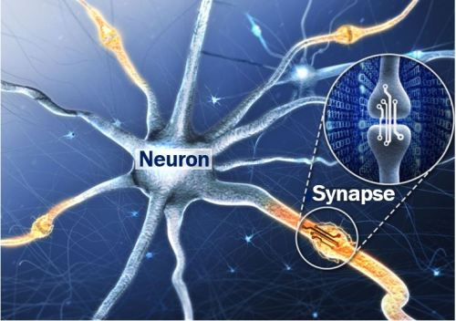 Neuron and synapse vs artificial synaptic device