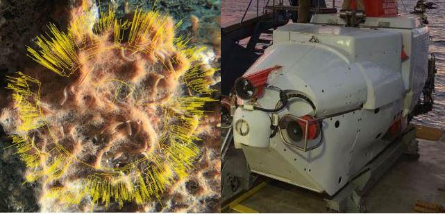 Alving submersible and colony of microbes – thumbnail