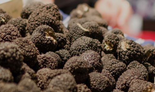 Truffle Industry and climate change thumbnail