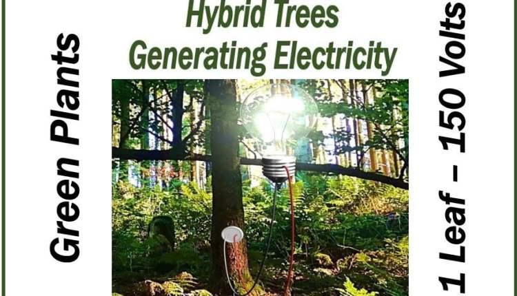 Green Plants Electricity – thumbnail