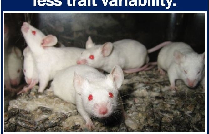 Outbred vs inbred mice for biomedical research