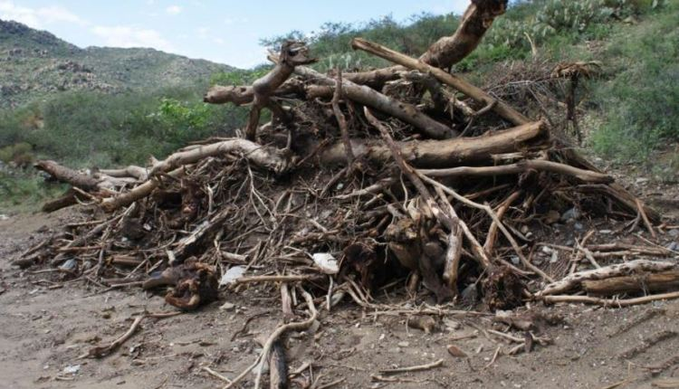 Biomass Energy Portugal article – thumbnail