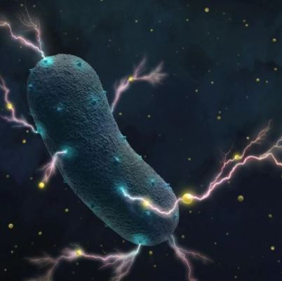 Electricity-producing bacteria