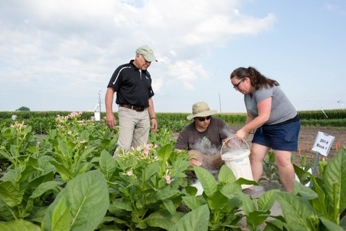 photosynthesis RIPE investigators collecting field trial samples