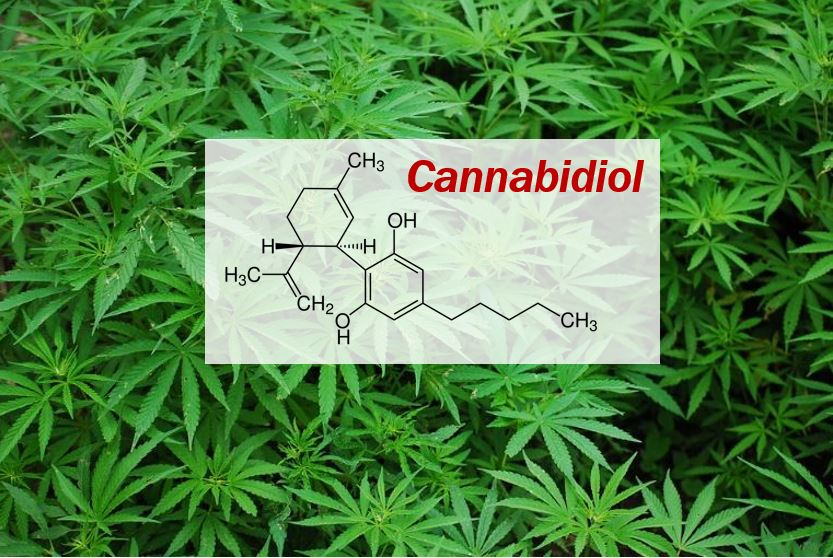 Cannabidiol CBD - article image 33222