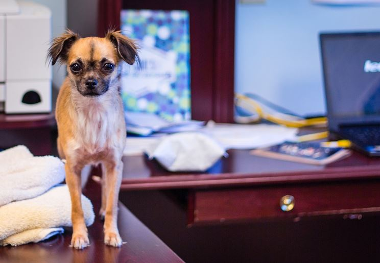 Office dog - image