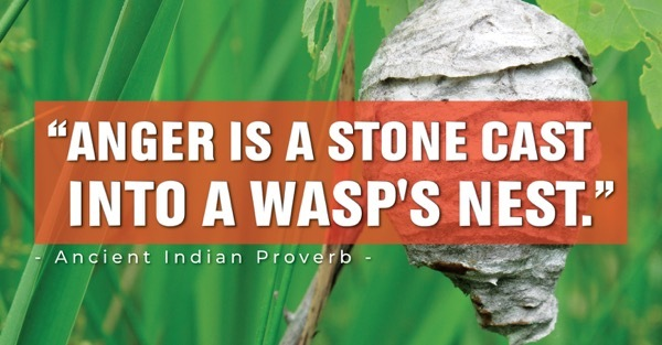 Anger is a stone cast into a wasps nest