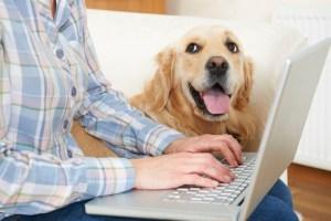 artículos y servicios para mascotas