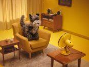 AA's Tukker the dog