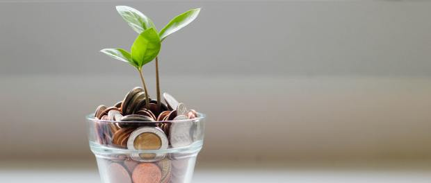 Plant growing from a pot full of coins