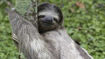 large-1464368850-3186-why-everyone-should-embrace-their-inner-sloth