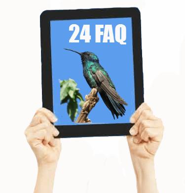 Hummingbird SEO key techniques