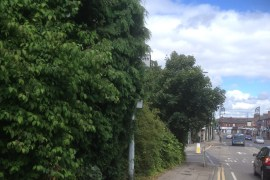 Hedges and trees obstruction warning