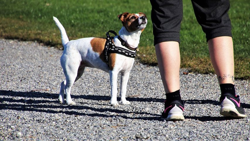 SEO Keywords for Dog Trainers
