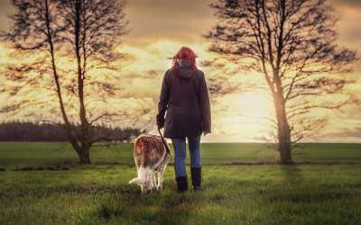 5 Digital Marketing Strategies for Dog Walkers