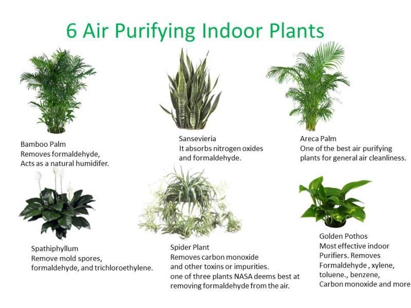 6-good-indoor-plants