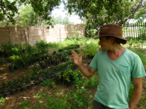 Ash Laurie has a Permaculture garden in the heart of Johannesburg, Market Nosh