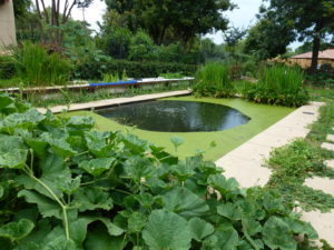 Pool free of chemicals with fresh water, a healthy spa, the permaculture way