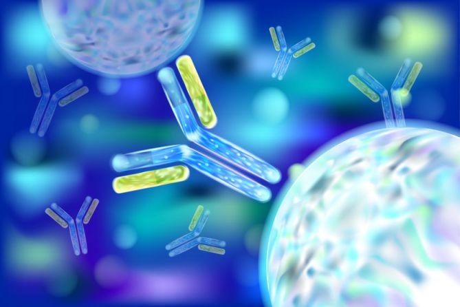 110068852 - antibody (ab), also known as an immunoglobulin (ig). 3d vector.
