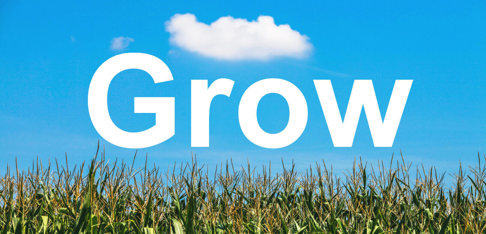 """picture of a cornfield with the word """"Grow"""" written in the blue sky"""