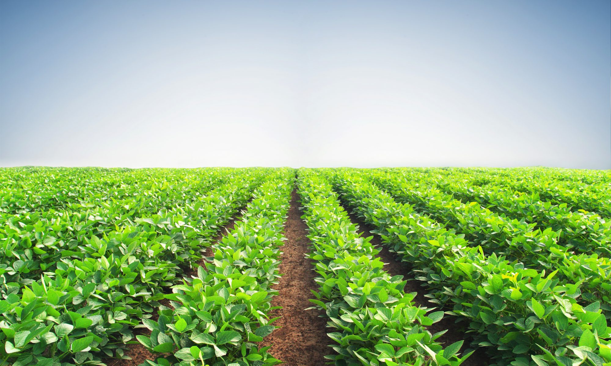cropped-agriculture.bean_.field_.jpg