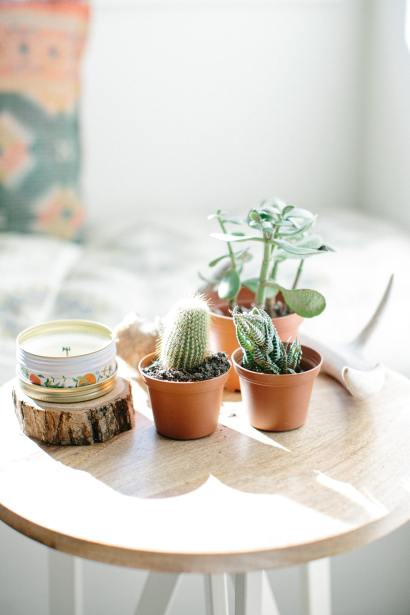 succulents on side table