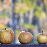 nature shock: wild apples