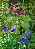 Garten Juli9