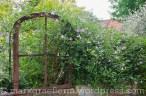 Garten Marguerite16