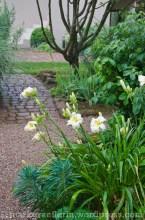 Garten Marguerite19