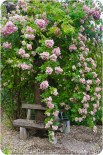 Garten Marguerite23