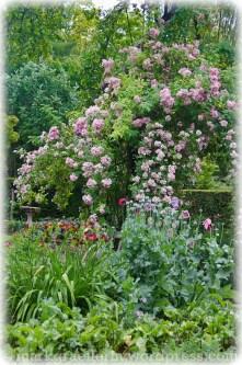 Garten Marguerite50