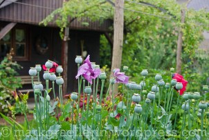 Garten Marguerite54