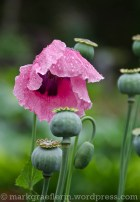 Garten Marguerite55