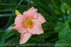 Garten Marguerite66