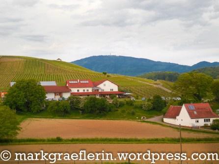 Blick auf das Weingut Berner, im Hintergrund der Blauen