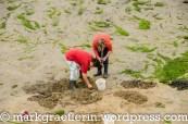 Muschelfischer auf der Suche nach Strandschnecken bei Ebbe