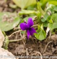 Garten März 5