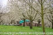 2016_Kirschbluete Markgraeflerland 04_17_11