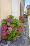 burgund-mit-avanti_5_flavigny-11