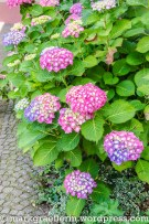 Englischer Garten Hugstetten 17