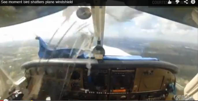 A bird hits a plane window